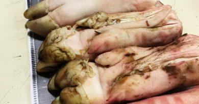 ¿Y si tenían peste porcina? Senasa evitó el ingreso de patas de cerdo que venían de China