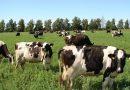 Ganadería: Las vacas, las más rápidas en copiar la devaluación