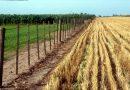 El agro de Córdoba, con menor producción y caída en los ingresos