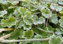 CLIMA: Tras las heladas, moderado ascenso térmico y ausencia de lluvias
