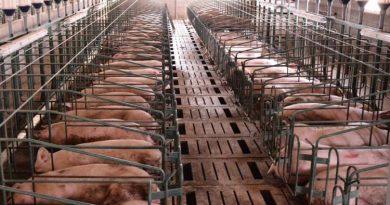 La Provincia, a favor de las inversiones chinas en cerdos y preocupada por los biocombustibles
