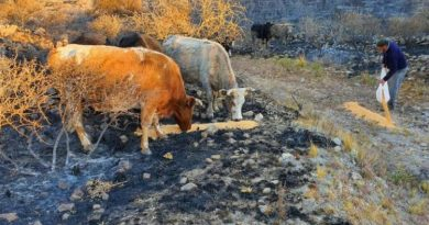 Nación homologó la emergencia agropecuaria por incendios en Córdoba