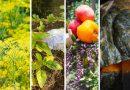 Huerta en tu Hogar completó el cupo de semillas primavera-verano