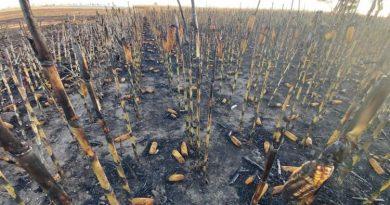 Cambios en la ley de manejo de fuego: para la Mesa de Enlace, ponen en serio riesgo a la producción