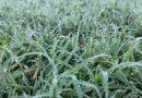 El frente frío trajo las primeras heladas del año a Córdoba, que podrían complicar al maní