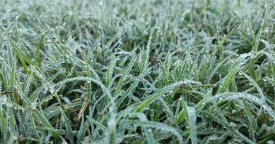 CLIMA: Tras el temporal, llegaron a Córdoba las primeras heladas agrometeorológicas de 2021
