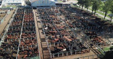 Presión para el precio del asado: el novillito superó los $ 200