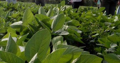El Gobierno de Córdoba lanzará un programa de certificación de producciones agroecológicas